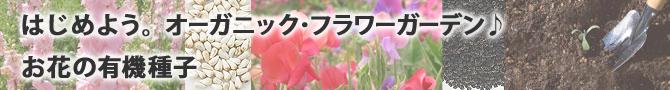 はじめようオーガニックフラワーガーデン♪お花の有機種子